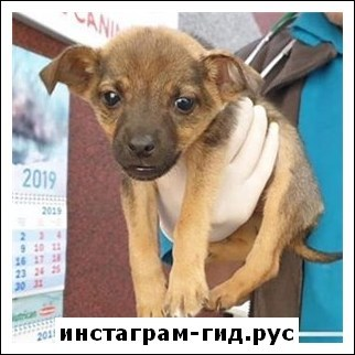 Анна Кошмал (Сморковкина)